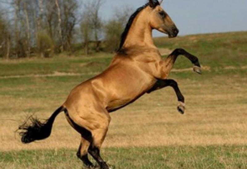 Несчастный случай в Барде: 35-летний мужчина погиб, упав с лошади