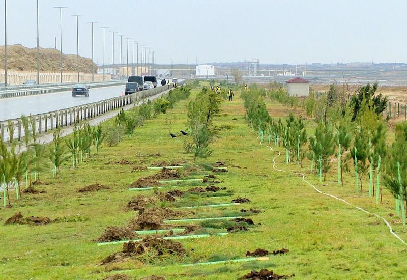 Посадка в Азербайджане 650 тыс. деревьев в один день очень важно как с экологической, так и политической точки зрения