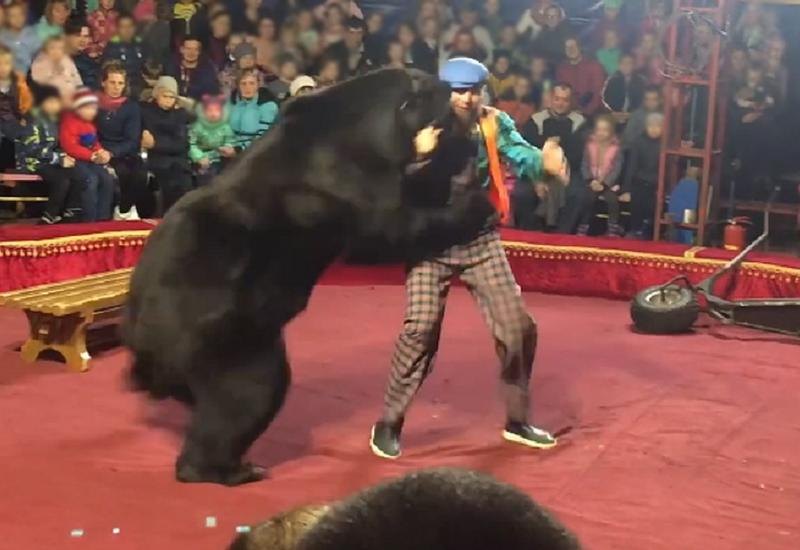 Медведь напал на дрессировщика в цирке в Карелии