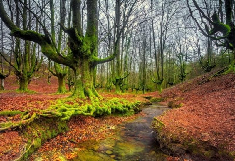 Мистический парк Горбеа в Испании