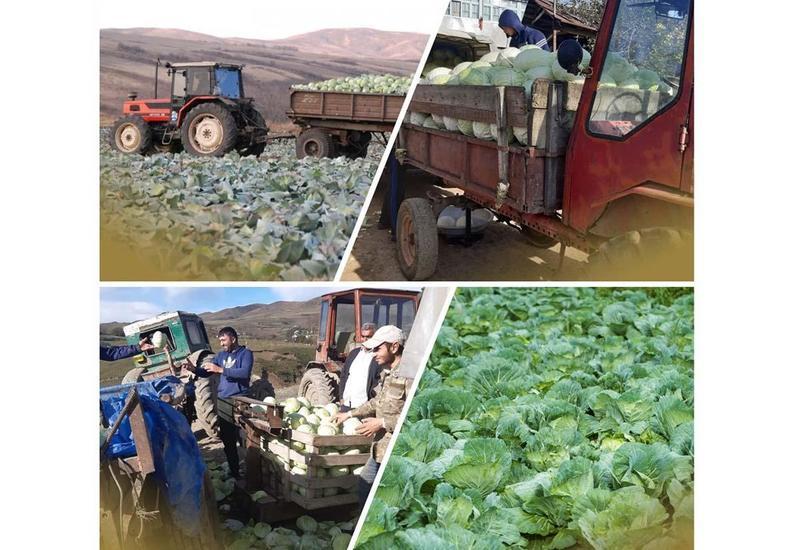 Агентство по развитию МСБ Азербайджана помогло фермерам реализовать продукцию