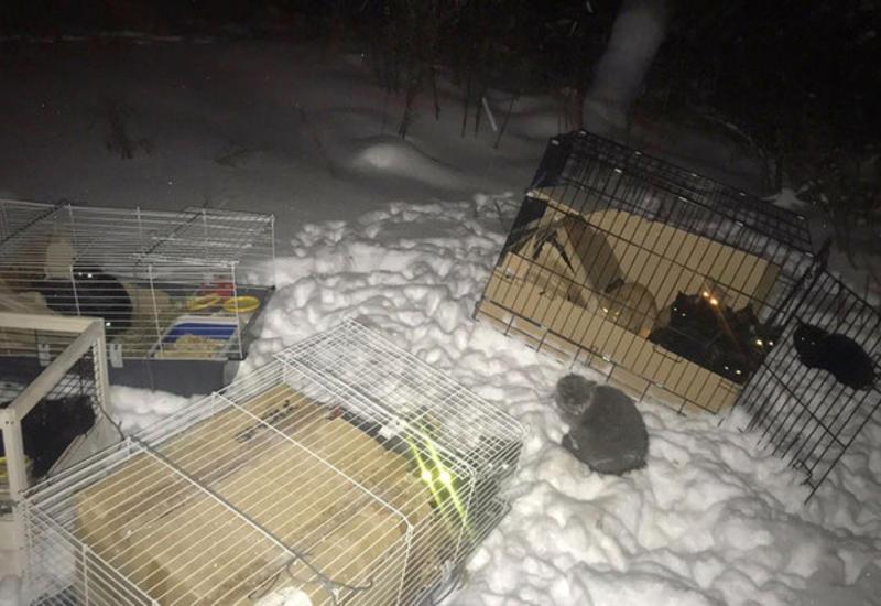 В России оставили на морозе 28 котят в клетках