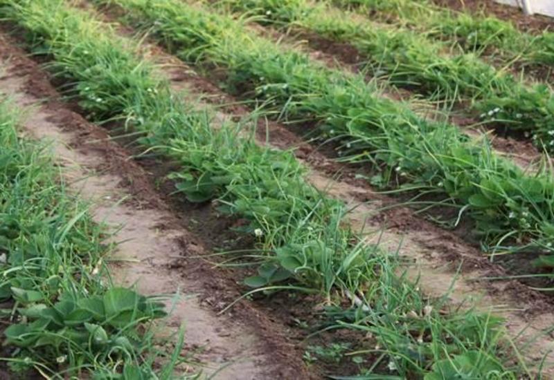 Министерство обратилось к фермерам, желающим получить субсидии