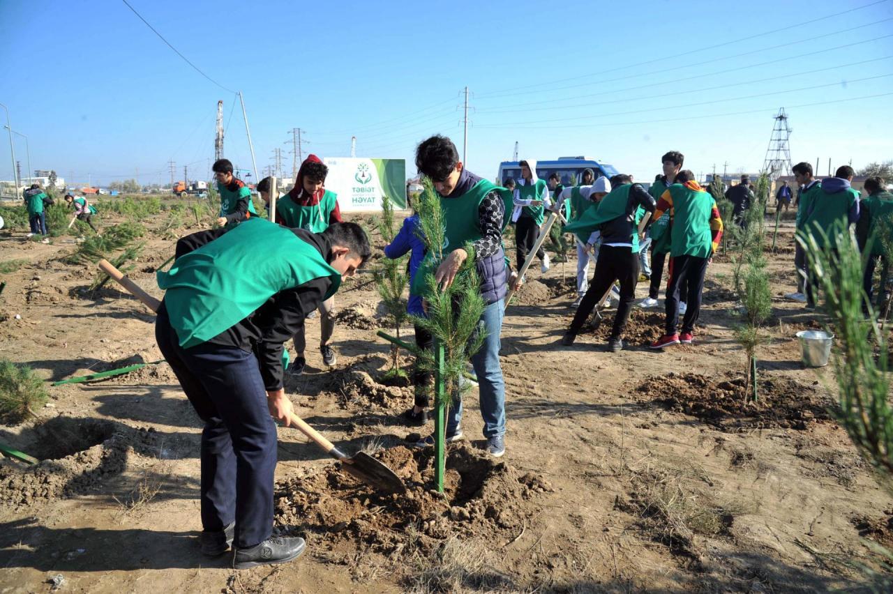 """Общественное объединение """"Региональное развитие"""" организовало акцию по высадке деревьев, посвященную Дню Государственного флага"""