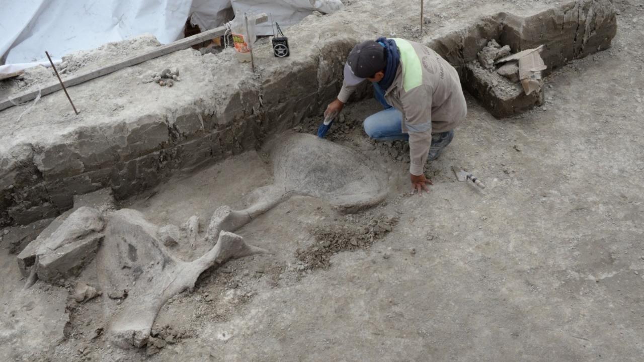 """Найдено самое крупное """"кладбище"""" мамонтов и самые древние ловушки на них"""