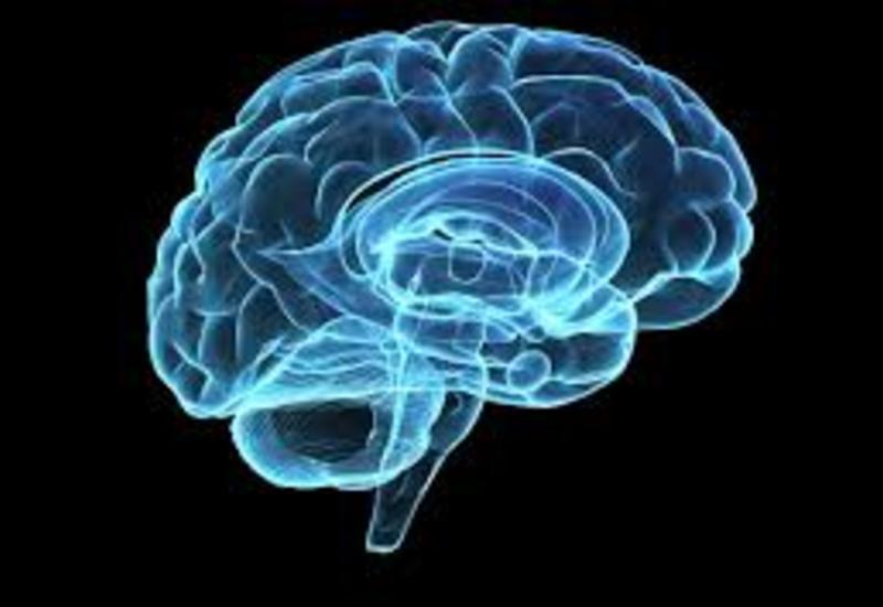 """Ученые узнали, как мозг """"сортирует"""" различные виды боли"""