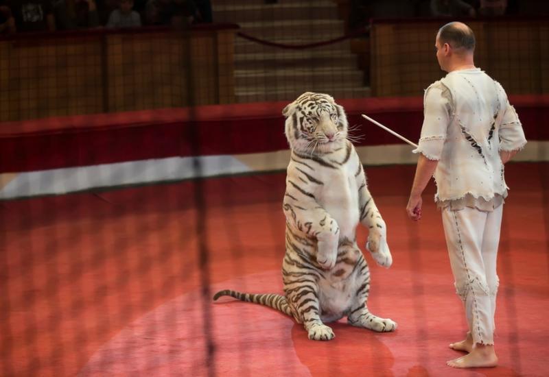 Париж закрыли для цирков с дикими животными