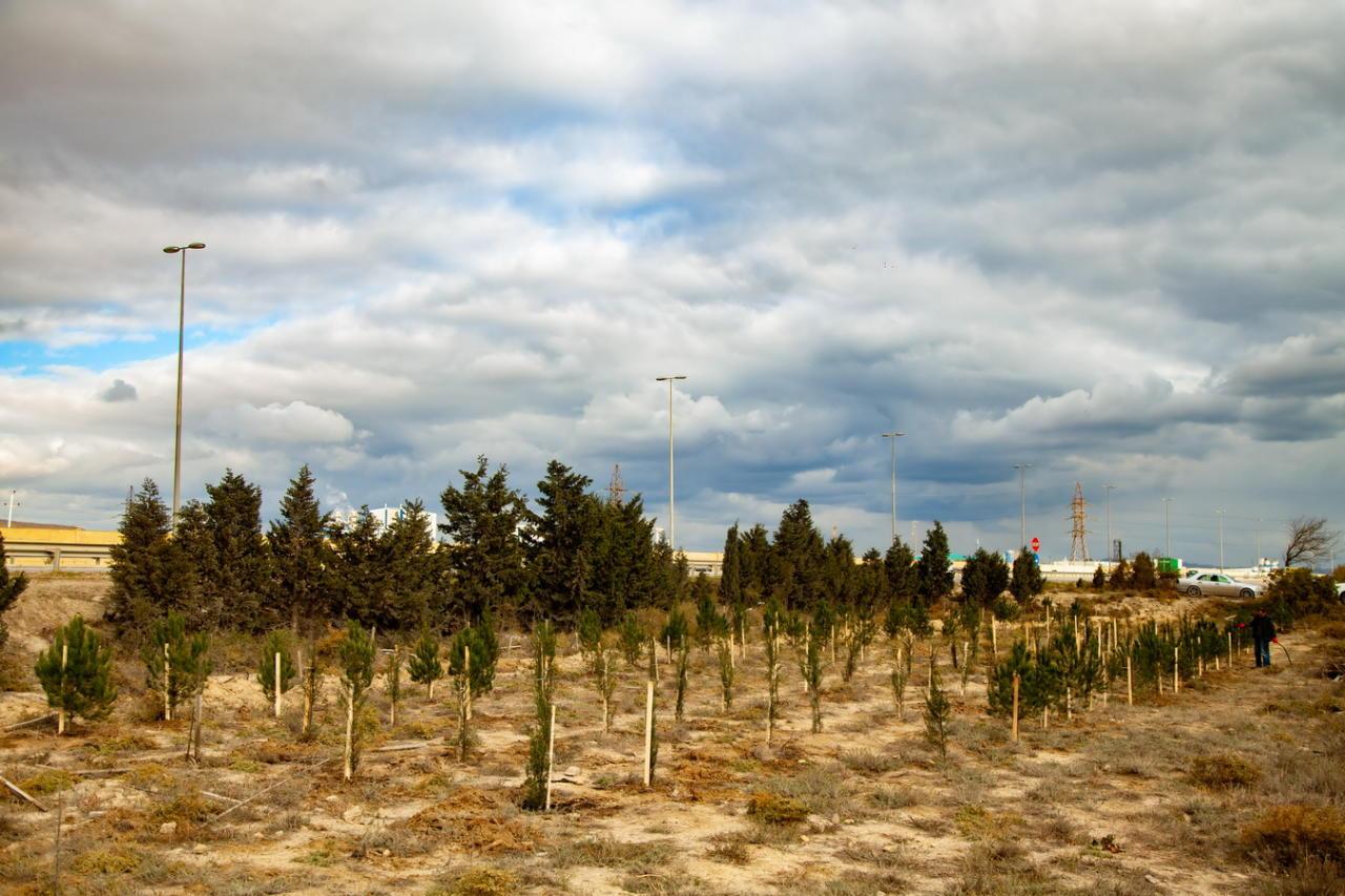 """Компания """"Rapid Solutions"""" почтила память выдающегося поэта Имадеддина Насими, высадив кипарисы в поселке Гарадаг, под лозунгом «Природа= Дерево=Дыхание»"""