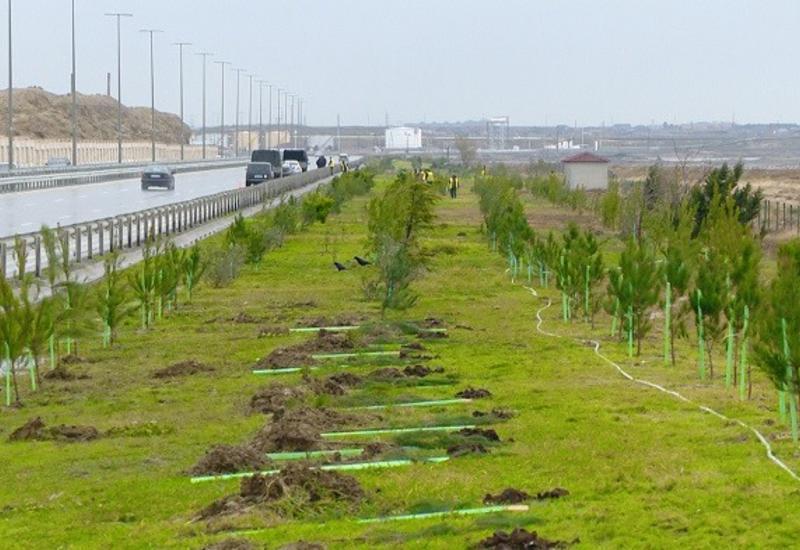 Вдоль крупной региональной автодороги в Азербайджане будет создана зеленая полоса
