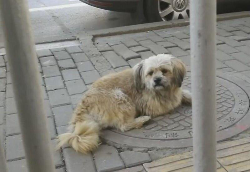 Верная собака три года ждет умершего хозяина возле больницы