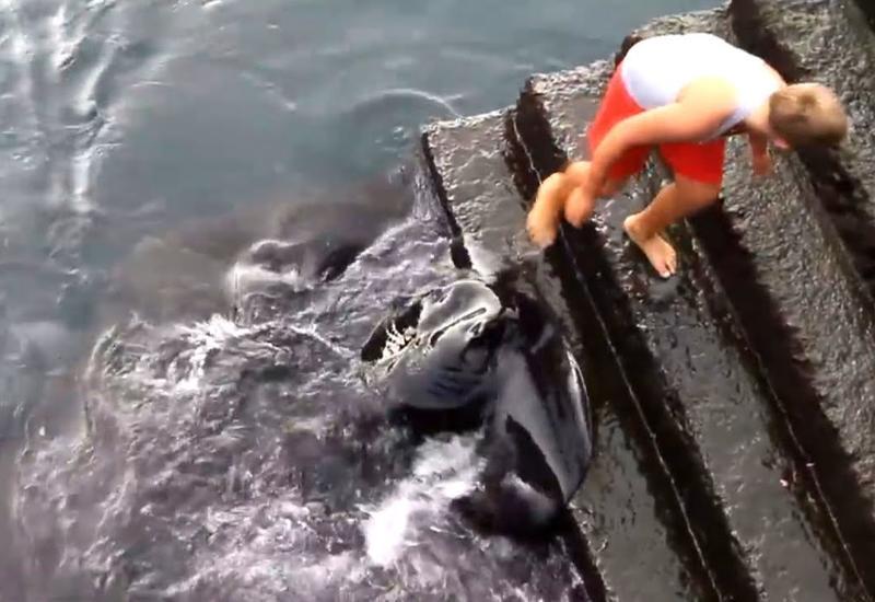 Мальчик был прямо у края воды, когда что-то заплескалось вокруг его ног