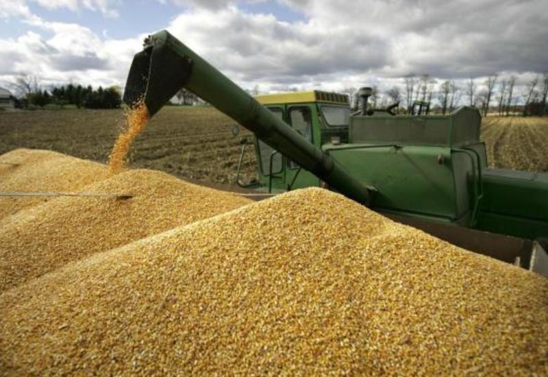 Россия значительно увеличила экспорт зерна в Азербайджан