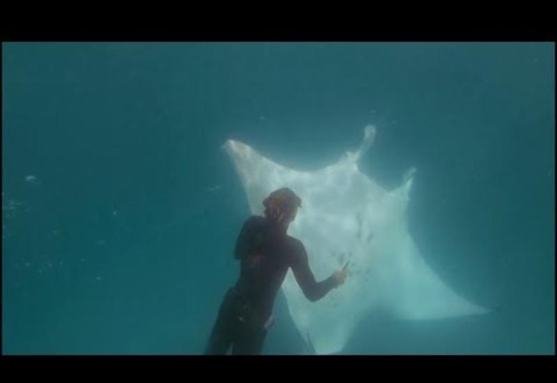 Большой скат подплыл к аквалангистам и попросил помощи: смотрите чем всё закончилось