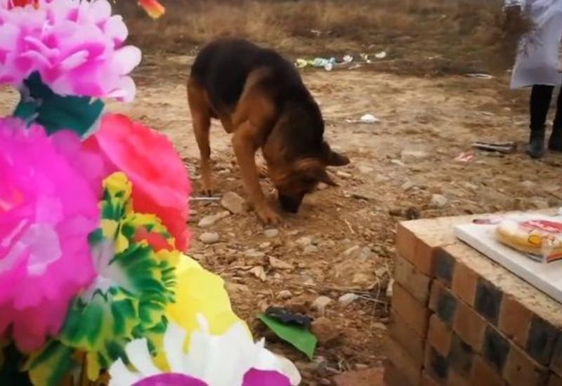 """Верная собака пыталась """"вызволить"""" хозяина из могилы"""