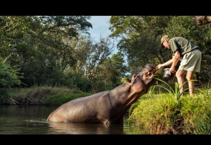 Рейнджер спас бегемота, он и подумать не мог, как он его отблагодарит