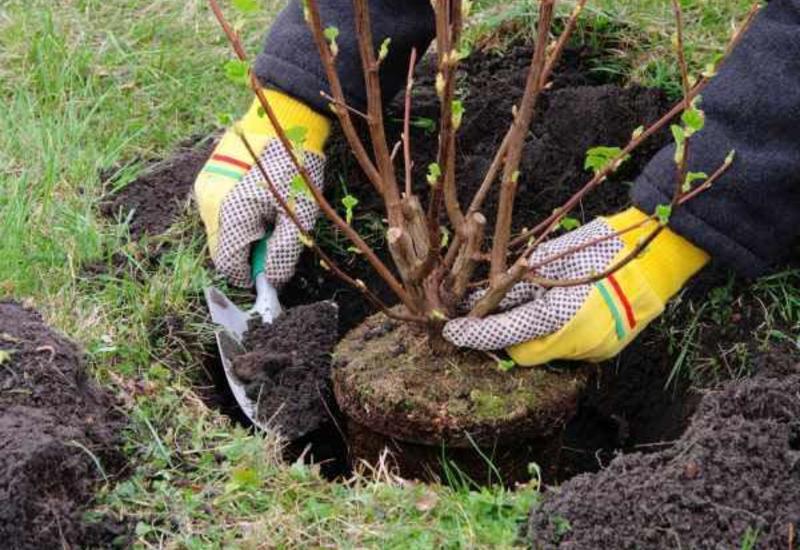 В Тертере будет посажено 10 тыс. деревьев