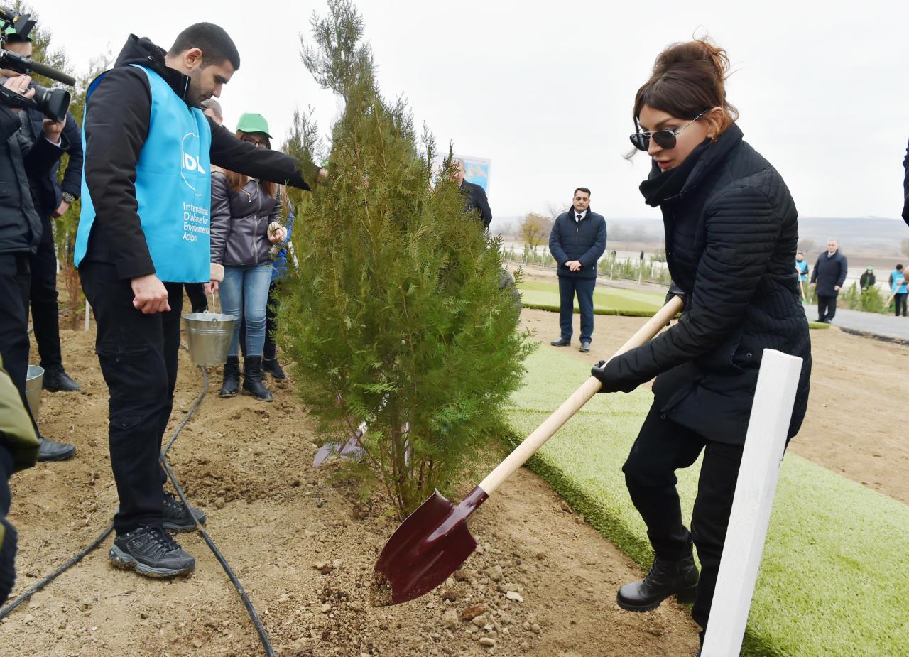 Президент Ильхам Алиев и Первая леди Мехрибан Алиева приняли участие в акции по посадке деревьев в Шамахинском районе