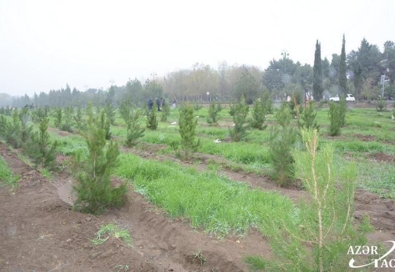 Минэкологии Азербайджана назвало районы, отличившиеся в акции по посадке деревьев