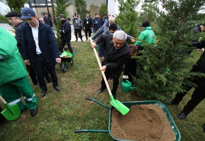 """Нефтяники присоединились к кампании """"Посадим в один день 650 тысяч деревьев"""""""