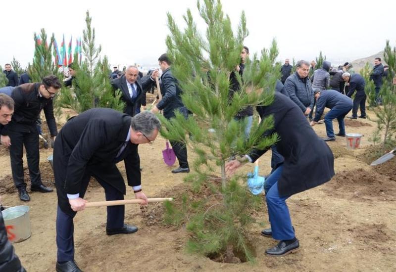 Эльдар Азизов присоединился к широкомасштабной акции по посадке деревьев в Баку