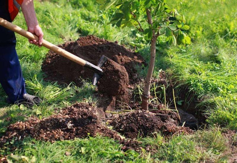 Инициатива по посадке 650 тыс. деревьев позволяет сплотить всех вокруг единой цели