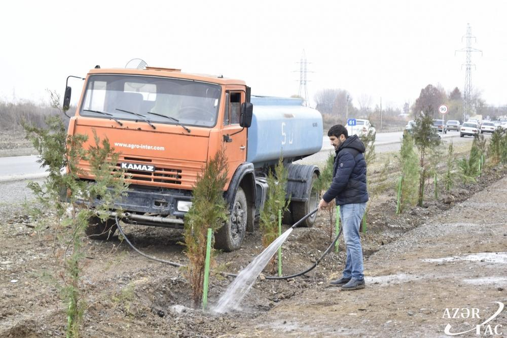 Жители Агджабеди также присоединились к акции по посадке 650 тысяч деревьев