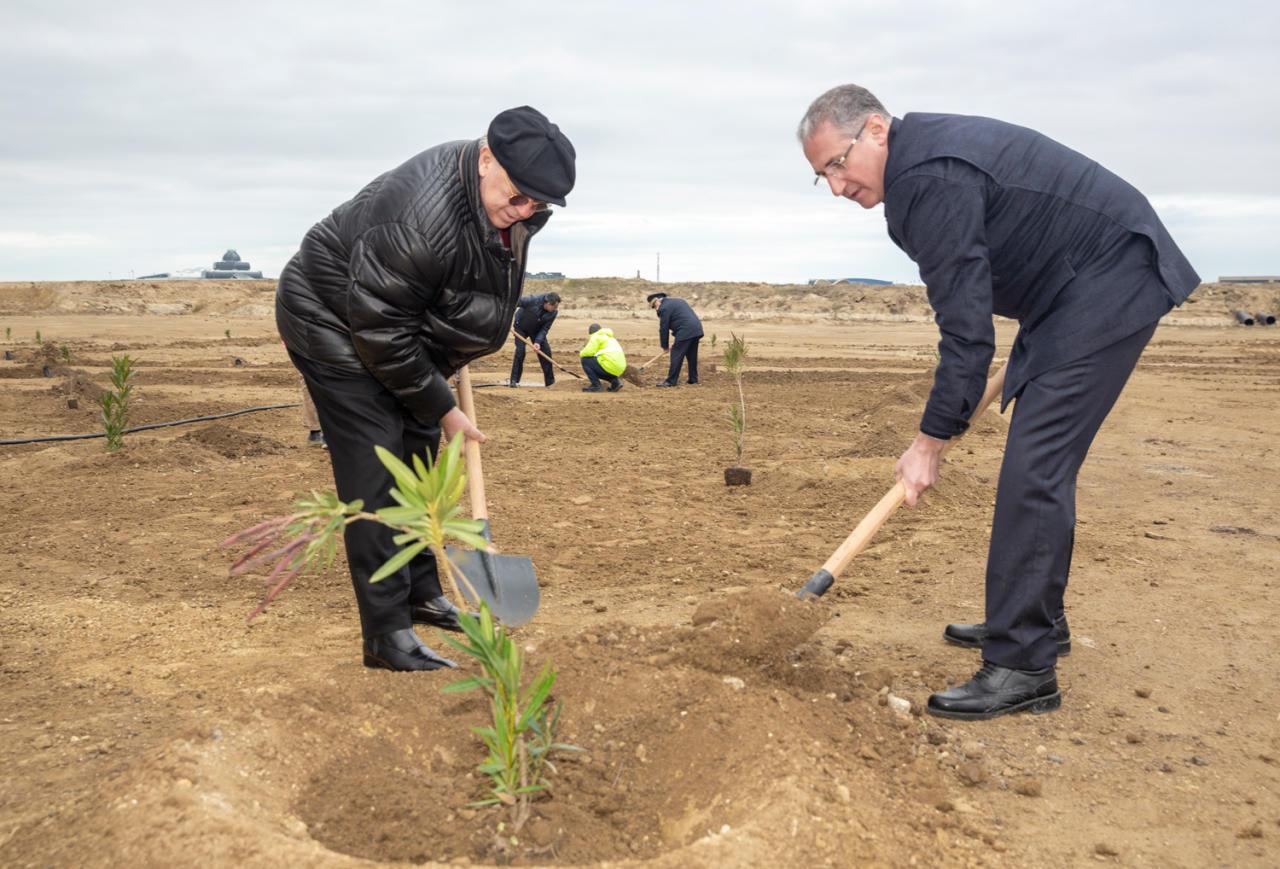 Осуществлена посадка более 4 тысяч деревьев