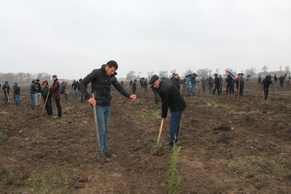 Жители Масаллы с большим воодушевлением присоединились к акции по посадке деревьев