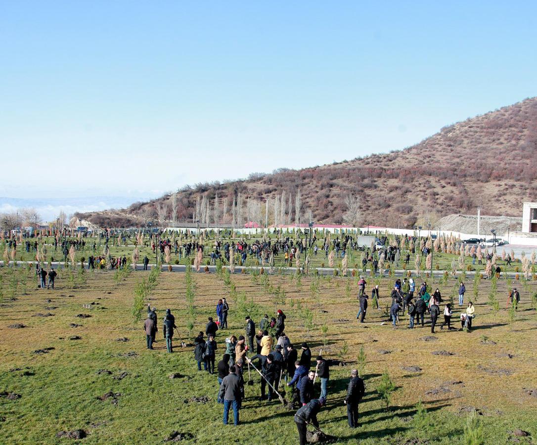 Şəkidə genişmiqyaslı kampaniya çərçivəsində minlərlə ağac əkilib
