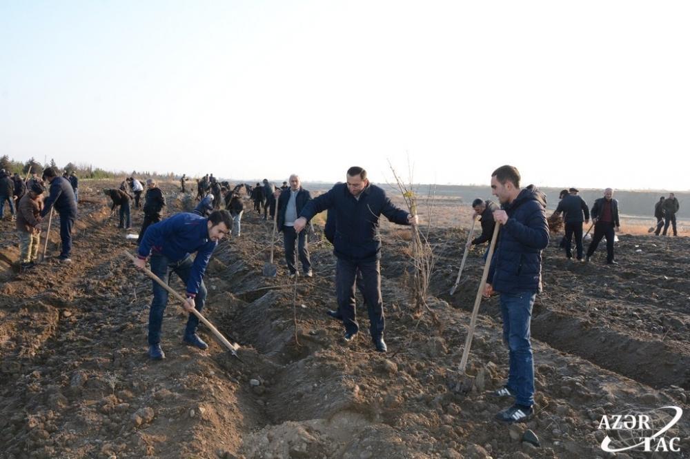 В Тертерском районе прошла акция по высадке деревьев