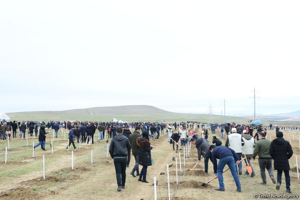 Праздник в Мушфигабаде - акция по посадке 650 тыс. деревьев, концертная программа, знаменитости