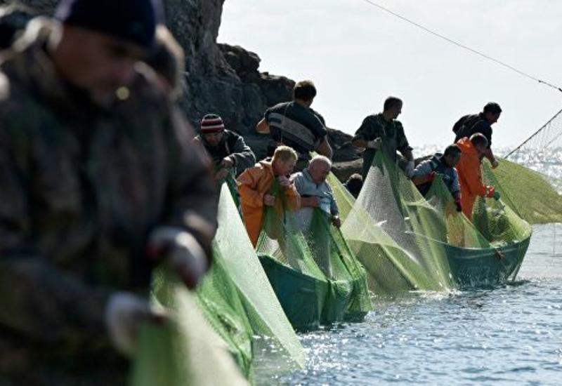 В Черном море затонуло судно с 30 тоннами анчоуса