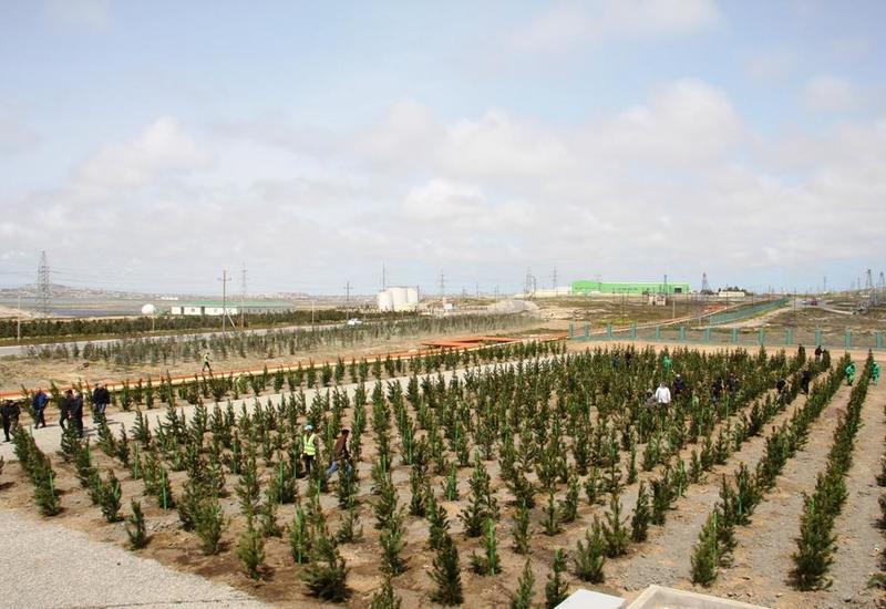 Граждане Азербайджана с большим воодушевлением встретили инициативу по посадке 650 тыс. деревьев за один день