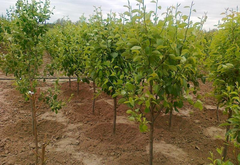Жители Товузского района с энтузиазмом присоединились к акции по посадке деревьев