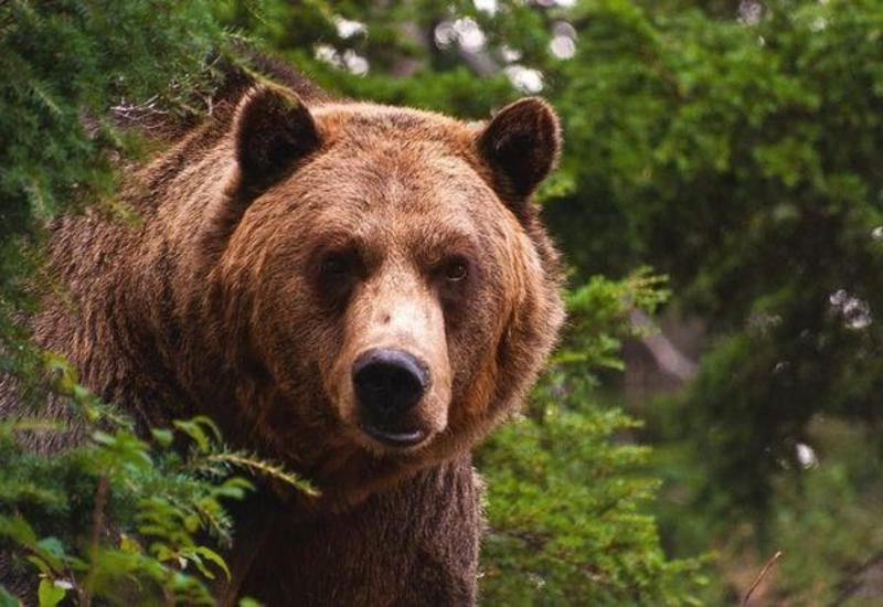 В Японии медведь устроился на зимнюю спячку в поликлинике