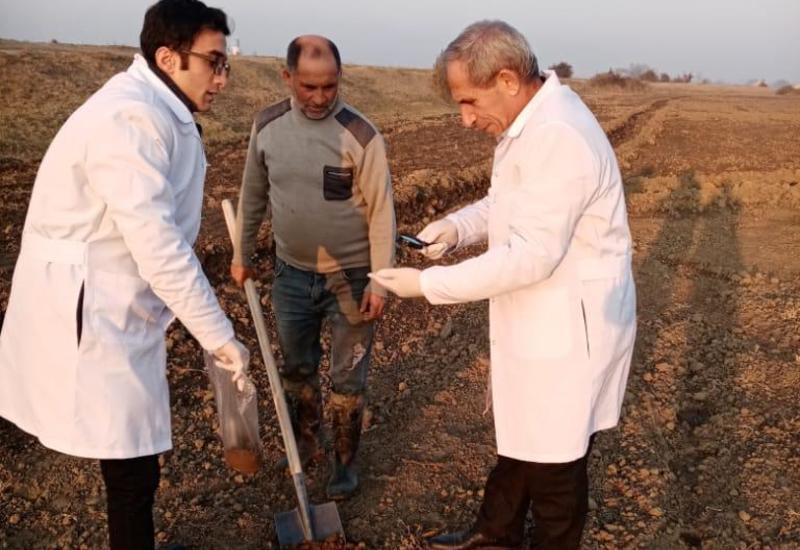 В Азербайджане проводятся масштабные проверки на посевных площадях