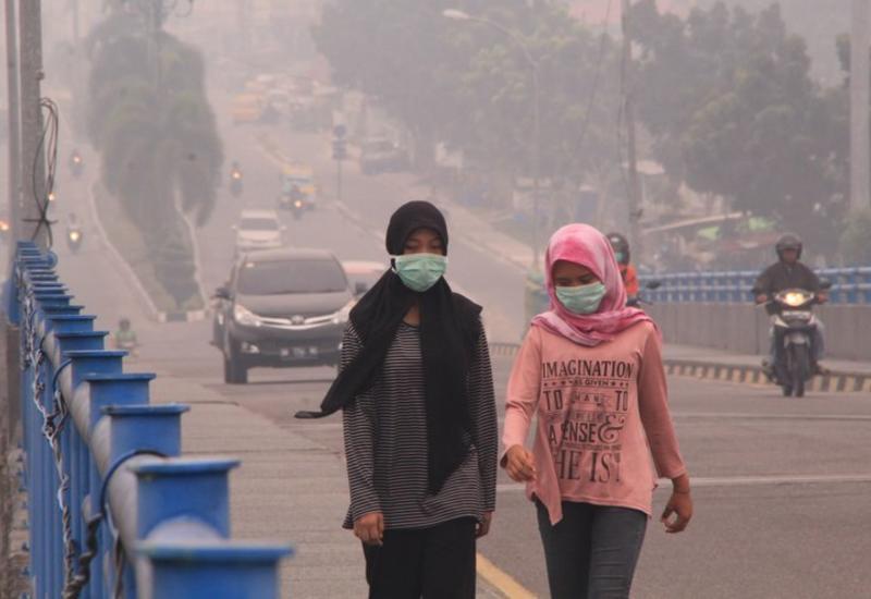 Ущерб от лесных пожаров в Индонезии оценили в $5,2 млрд
