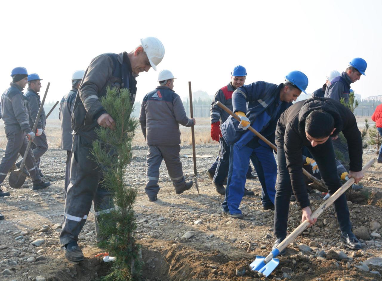 """ООО """"Азералюминий"""" провело акцию по посадке деревьев в связи с днем почтения памяти великого лидера Гейдара Алиева"""