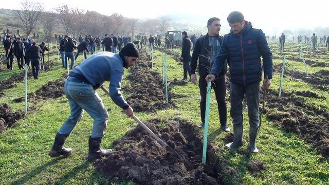В Масаллинском районе прошла акция по посадке деревьев