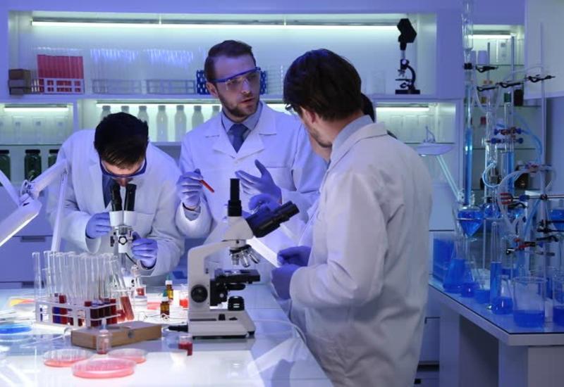 В Японии разрешили эксперимент по выращиванию человеческой железы в организме свиньи