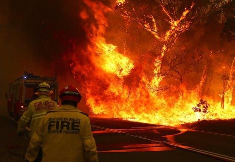 Власти Австралии выделят порядка $35 млн на восстановление природы после пожаров