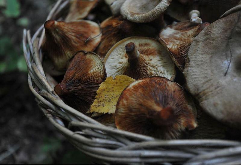 В Азербайджане нашли новые виды грибов