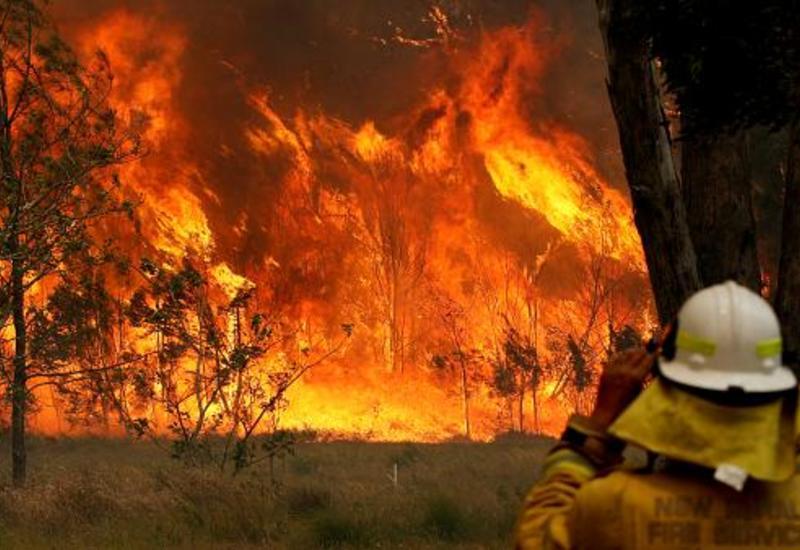 Австралия выделит дополнительные средства для пострадавших от пожаров