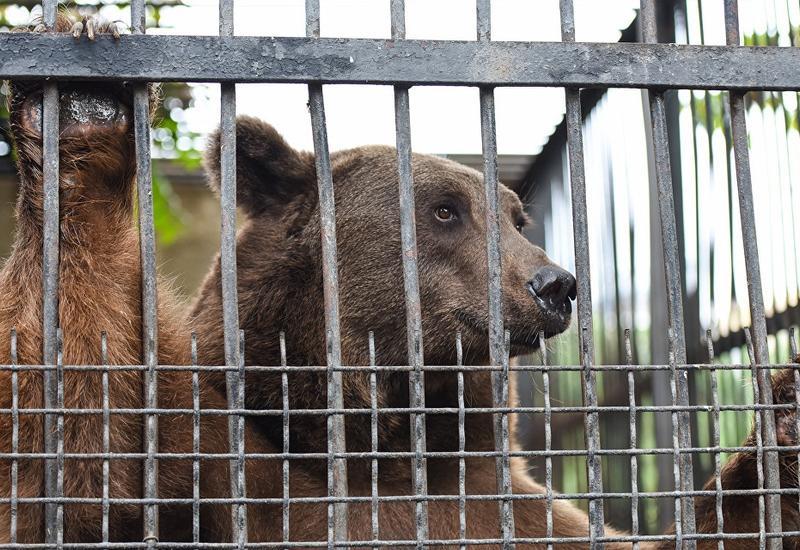 Названы сроки открытия Бакинского зоопарка