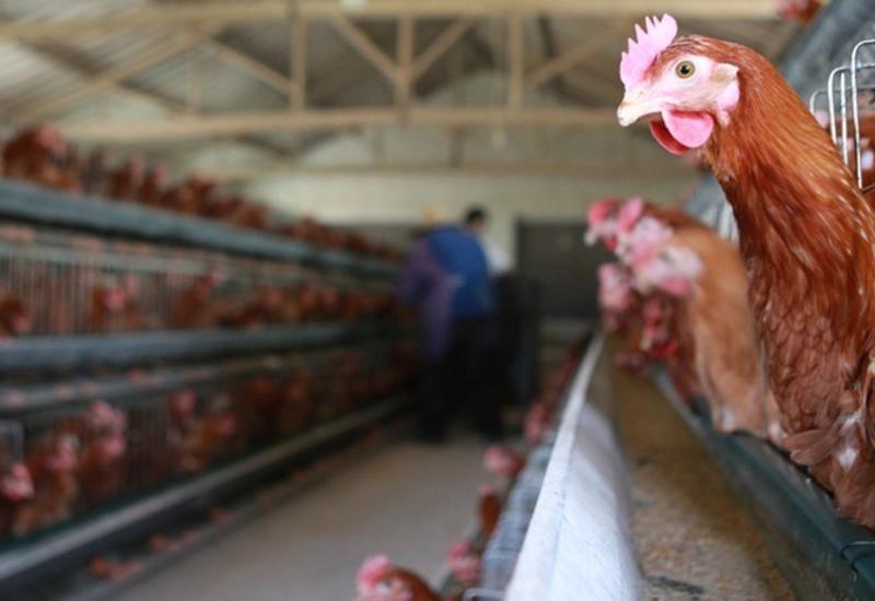 Евросоюз запретил ввоз мяса птицы c Украины