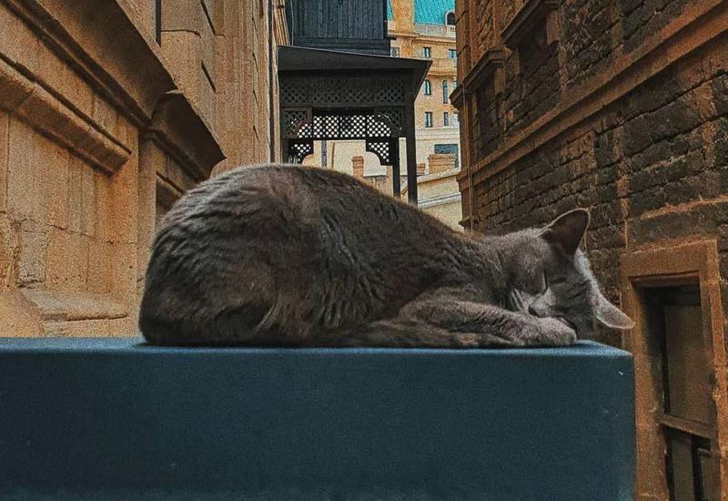 Кошки Старого города в блоге @seemyicherisheher