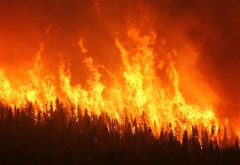В Огузе начался крупный пожар в горах