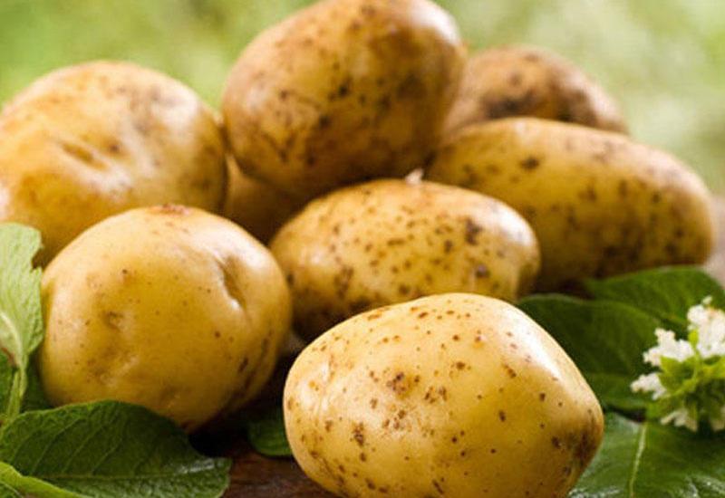 В Азербайджане начали выращивать четыре новых сорта картофеля