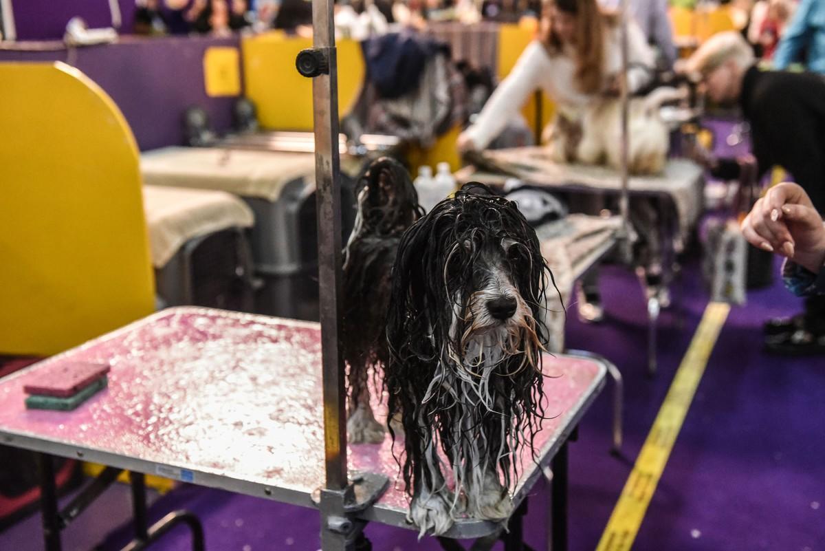Самая популярная и престижная выставка собак