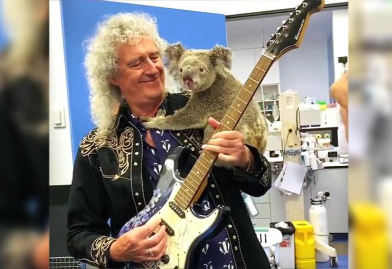 Гитарист группы Queen сыграл для выжившей в пожаре коалы